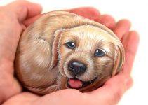 Perro en piedras
