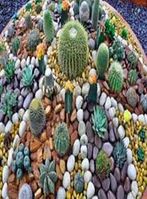 piedras para jardin blancas